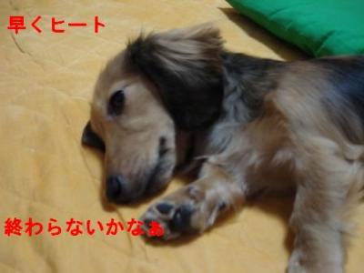 DSC03133.jpg