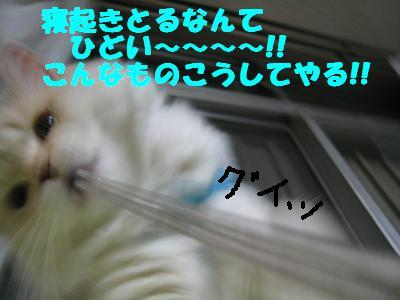 20070501003953.jpg