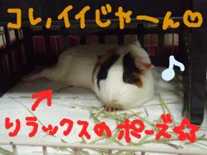 20071010180321.jpg