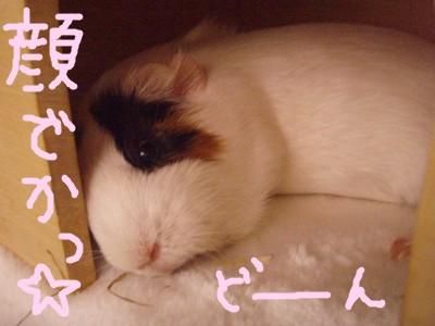 mokokaodekai01.jpg