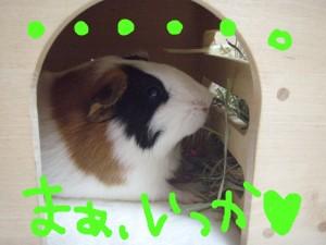 mokoya10.jpg
