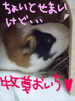 mokoya11.jpg
