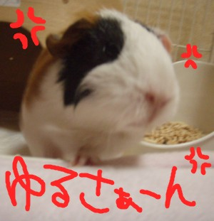 mokoya7.jpg