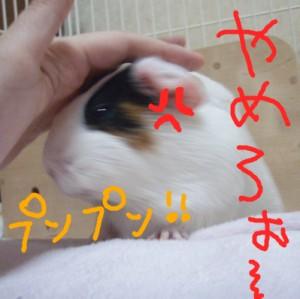 mokoya8.jpg