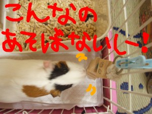mokoya9.jpg