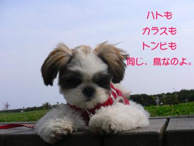 20070407_2.jpg