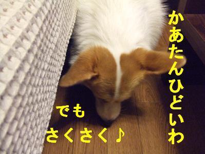 20071011225019.jpg