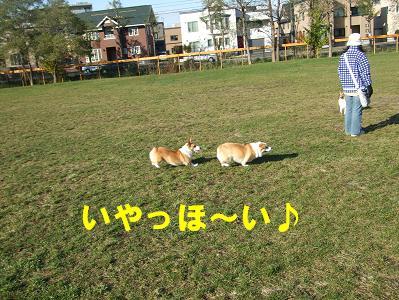 20071104200046.jpg