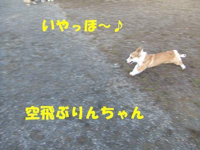 20071119225440.jpg