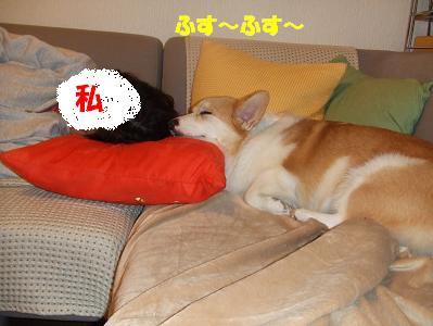 幸せなうたた寝
