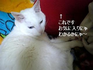 070329_201212.jpg