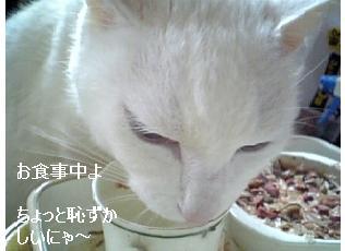 oshokuji.jpg