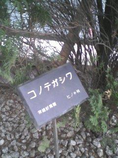 20070404074836