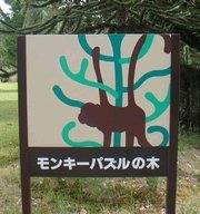 モンキーパズルの木1