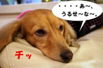 モデル犬麦②