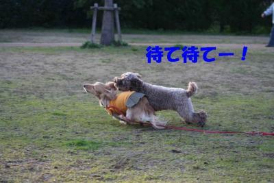ピノ&風太②