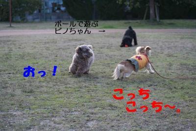 ピノ&風太③