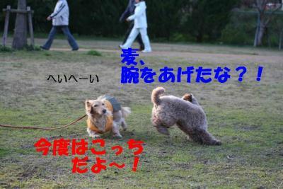 ピノ&風太④