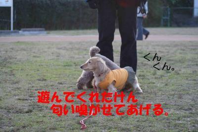 ピノ&風太⑤