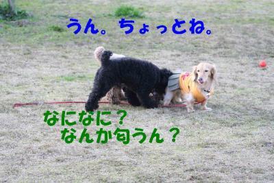 ピノ&風太⑥
