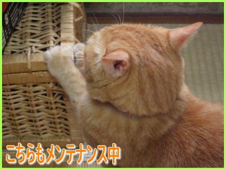 20071010130259.jpg