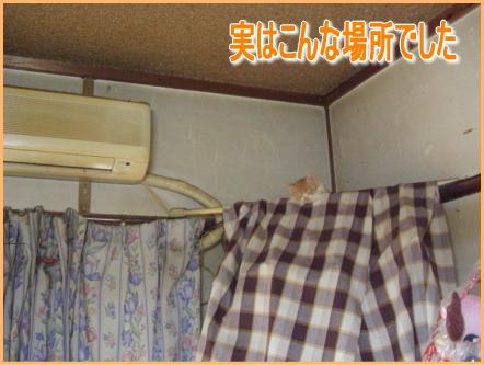 20071107094202.jpg