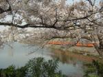201系と桜