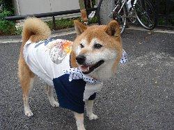 通りすがりのお祭り犬