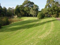 通学路の芝生