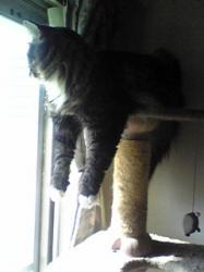 cat towerから外を