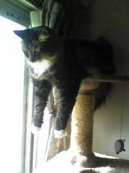 cat towerから発見