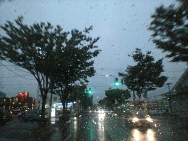 梅雨ですなぁ。 ②