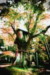 ASHURA-Wood.jpg
