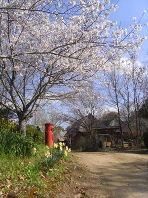 桜201205
