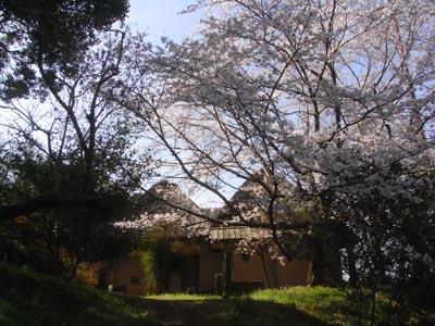 桜201202