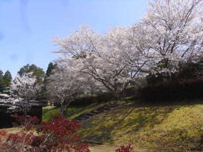 桜201207