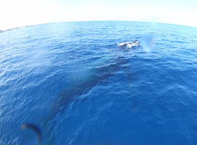 ハワイ、クジラのブロー直前