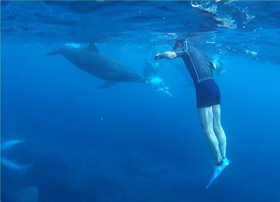 イルカと人と・・・