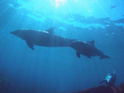 イルカと光