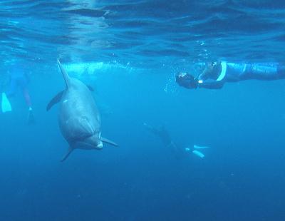イルカと人と