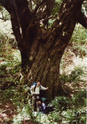 yakutaiboku1992