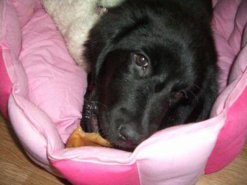 ピンクのベッド③