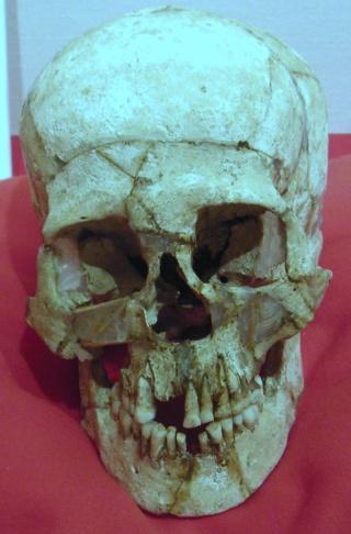 縄文時代の女の人の頭蓋骨