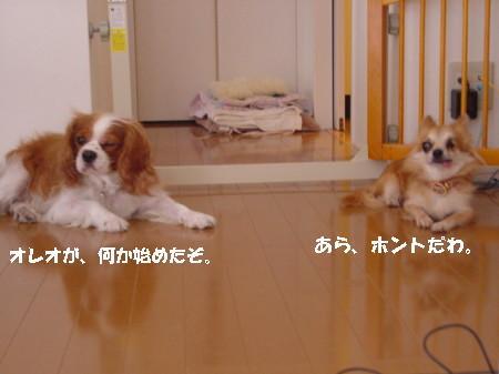 20060911115324.jpg