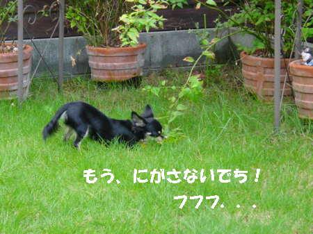 20060911115637.jpg