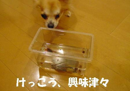 20060911120415.jpg