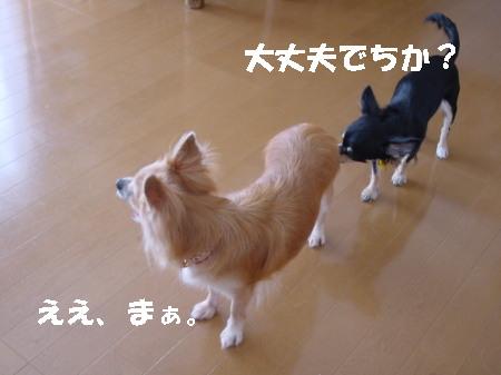 20060911221014.jpg