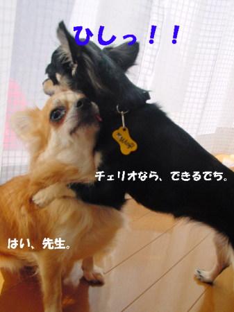 20060912113233.jpg