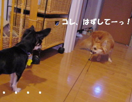 20060915013731.jpg