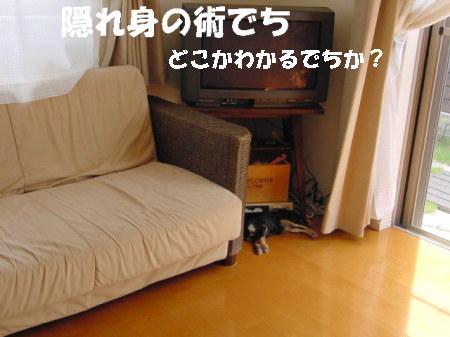 20060915225333.jpg